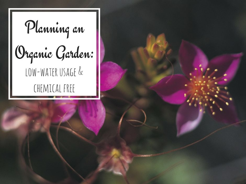 Organic Garden Planning for a Healthier Garden