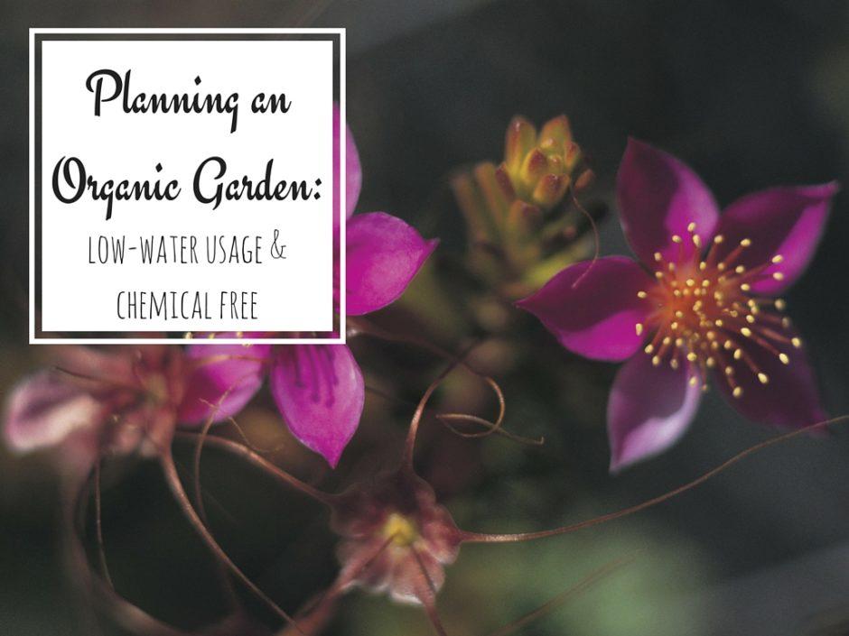 Organic Garden Planning for a Healthier Garden