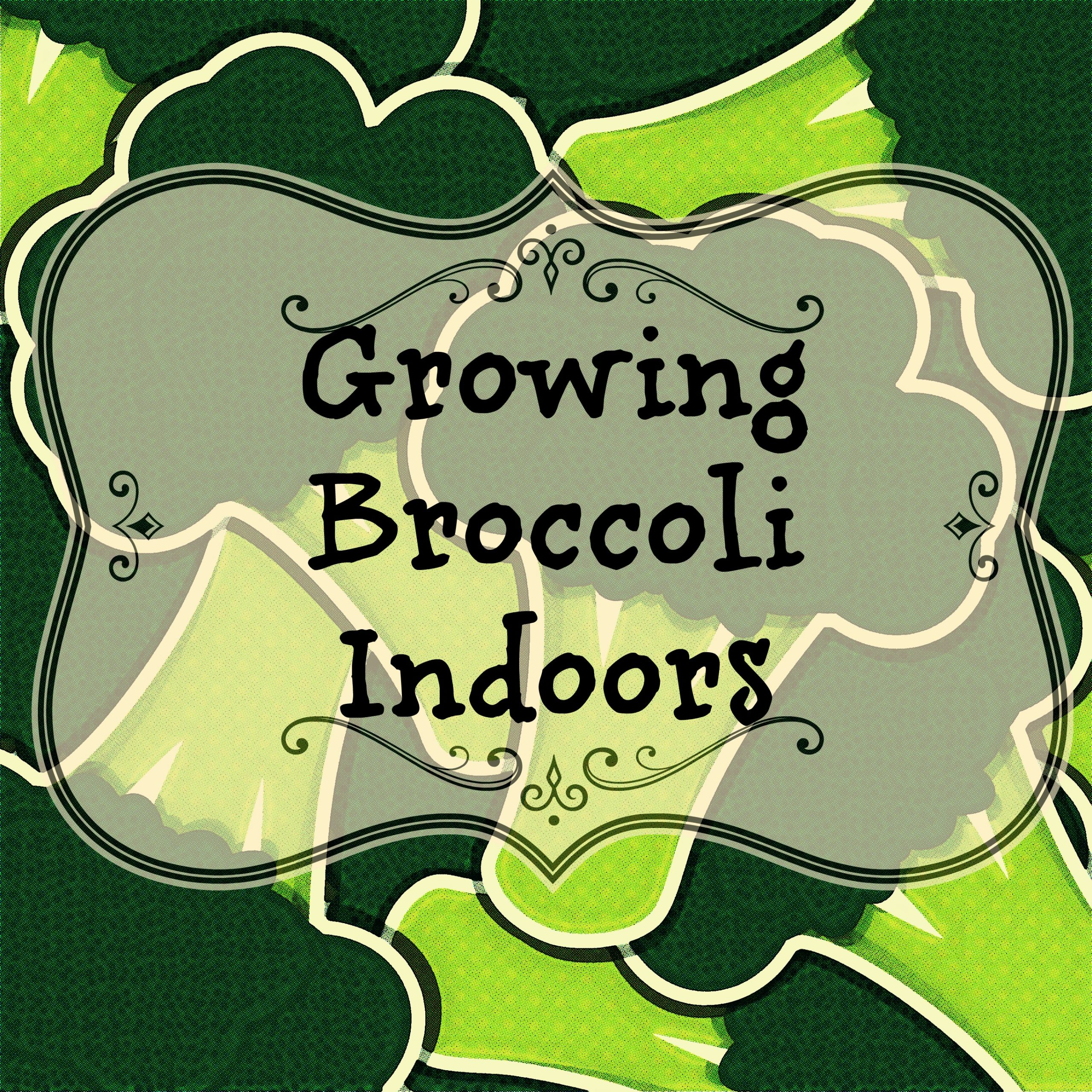 Growing Broccoli Indoors
